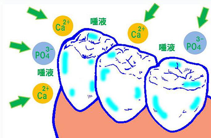 正しい歯磨きの方法/食後しばらく経った歯